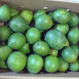 Fresh Green Mangos 500g.(Available Wednesday & Friday)