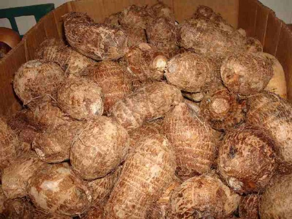 GABE . Taro Tuber or coco yam 1kg. Back in Stock